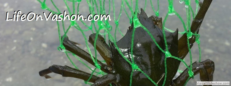 Shield-backed kelp crab (Pugettia productus), Raab's Lagoon, Tim DiChiara